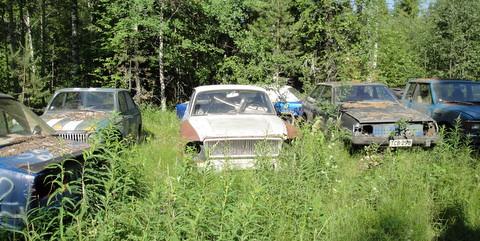Metsänreunaan hylättyjen ruosteisten autonromujen ympärillä kasvaa horsmia
